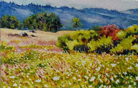Hayfield Tarweed: Watercolor, 5
